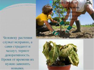 Человеку растения служат исправно, а сами страдают и чахнут, теряют декорати