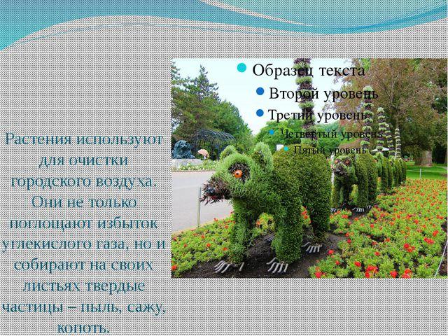Растения используют для очистки городского воздуха. Они не только поглощают...