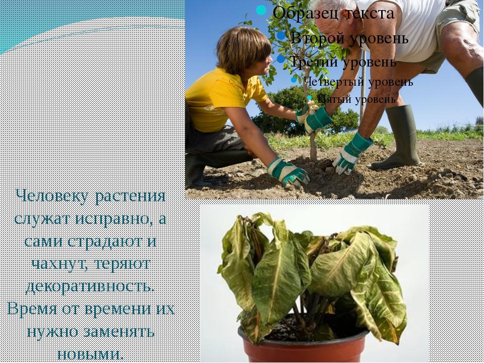Человеку растения служат исправно, а сами страдают и чахнут, теряют декорати...
