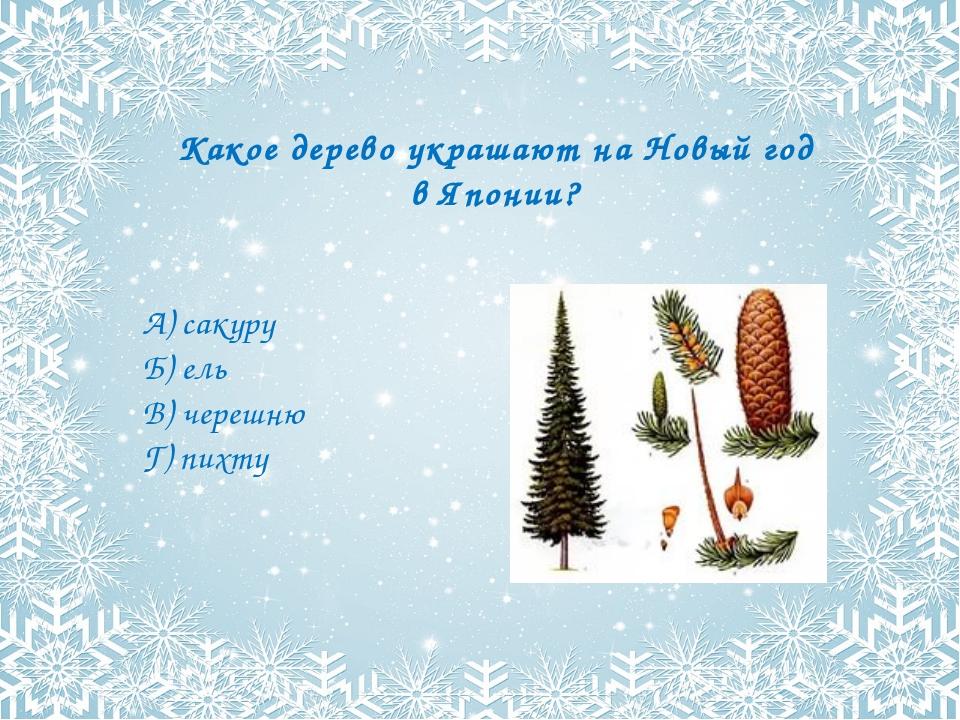 Какое дерево украшают на Новый год в Японии? А) сакуру Б) ель В) черешню Г) п...