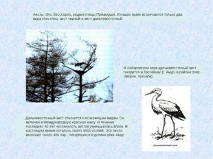 Дальневосточный аист относится к исчезающим видам. Он включен в Международну