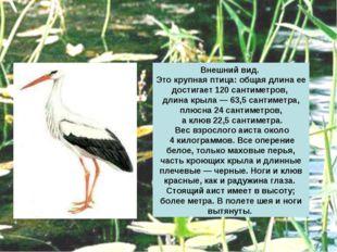 Внешний вид. Это крупная птица: общая длина ее достигает 120 сантиметров, дли