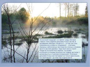 Лесолуговой ландшафт составляет среду обитания ставших очень редкими дальнево