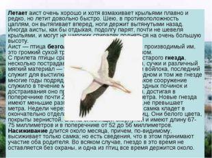 Летает аист очень хорошо и хотя взмахивает крыльями плавно и редко, но летит