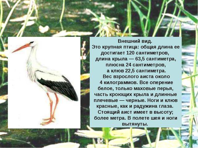 Внешний вид. Это крупная птица: общая длина ее достигает 120 сантиметров, дли...
