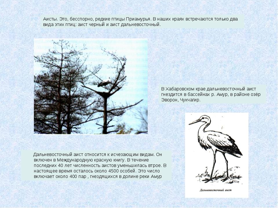 Дальневосточный аист относится к исчезающим видам. Он включен в Международну...