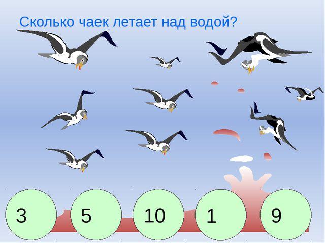 Сколько чаек летает над водой? 3 5 10 1 9