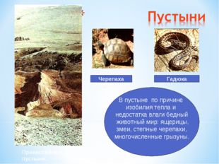 Гадюка Черепаха В пустыне по причине изобилия тепла и недостатка влаги бедный