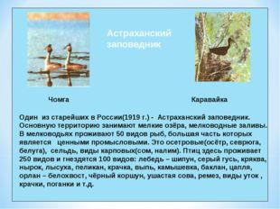 Чомга Каравайка Астраханский заповедник Один из старейших в России(1919 г.) -