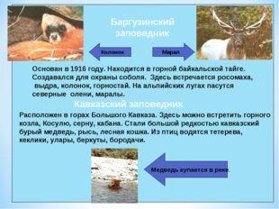 Основан в 1916 году. Находится в горной байкальской тайге. Создавался для охр