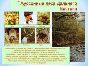 Тигр Куница -харза Соболь Амурский барсук Олень Крот Природные условия муссо