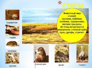 Животный мир степей: суслики, байбаки. полёвки, тушканчики, мелкие грызуны. И