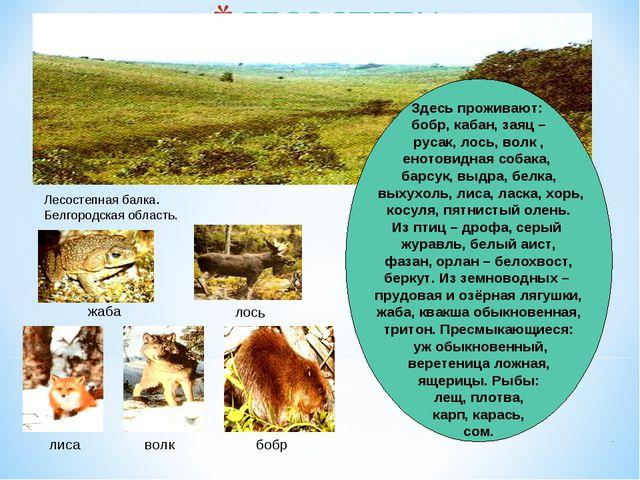 Лесостепная балка. Белгородская область. Здесь проживают: бобр, кабан, заяц –...