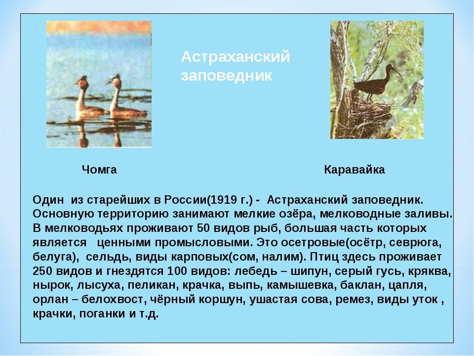 Чомга Каравайка Астраханский заповедник Один из старейших в России(1919 г.) -...