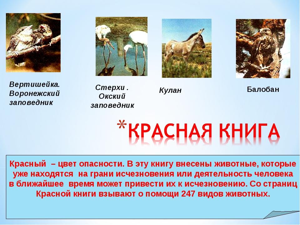 Стерхи . Окский заповедник Кулан Вертишейка. Воронежский заповедник Балобан К...