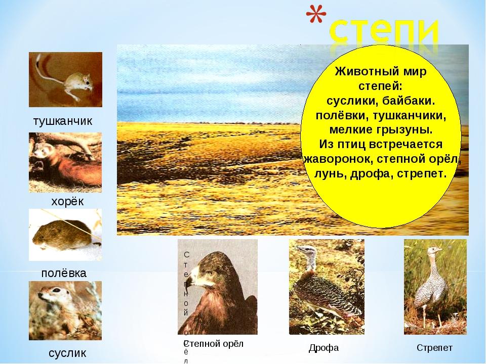 Животный мир степей: суслики, байбаки. полёвки, тушканчики, мелкие грызуны. И...