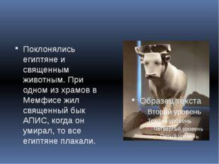 Поклонялись египтяне и священным животным. При одном из храмов в Мемфисе жил