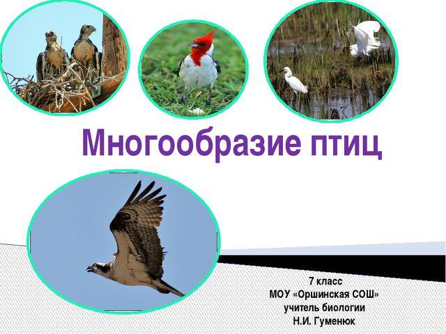 Многообразие птиц 7 класс МОУ «Оршинская СОШ» учитель биологии Н.И. Гуменюк