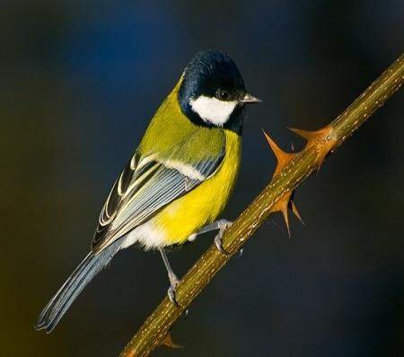 F:\птицы\0_7721_70684189_XL.jpg