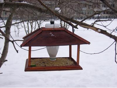 F:\птицы\semejnaya_nn1.jpg