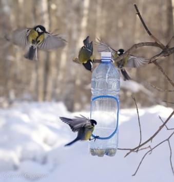 F:\птицы\eto-nalet.jpg