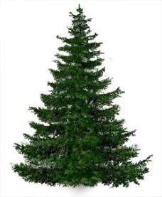 елка.jpg