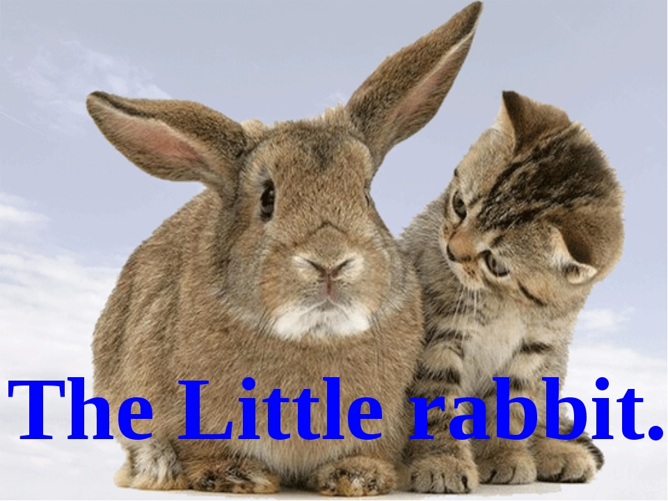 The Little rabbit.