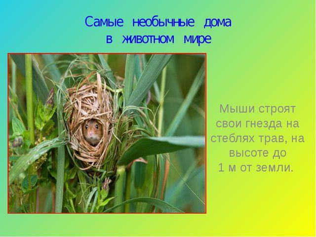 Самые необычные дома в животном мире Мыши строят свои гнезда на стеблях трав,...
