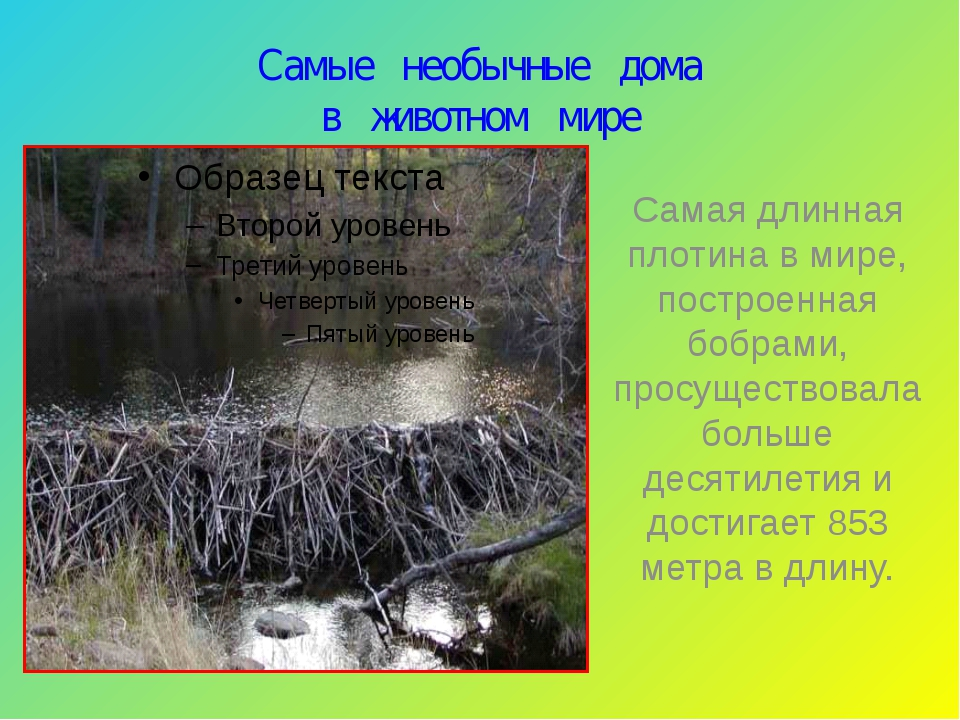 Самые необычные дома в животном мире Самая длинная плотина в мире, построенна...