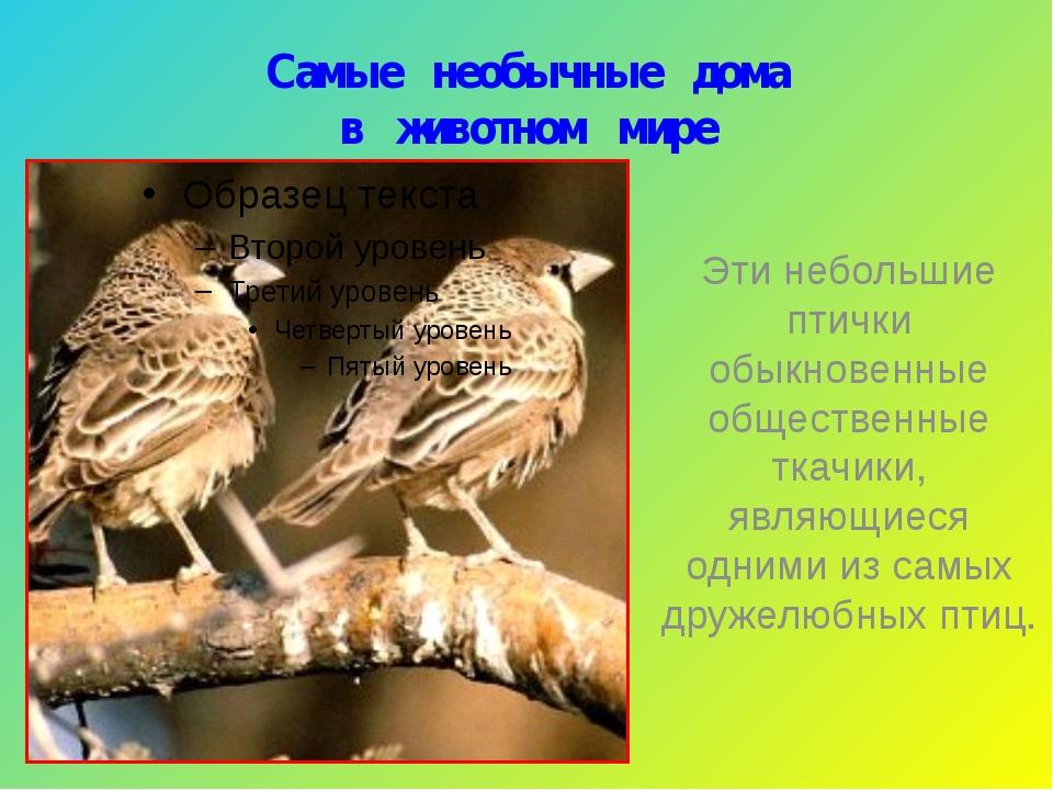Самые необычные дома в животном мире Эти небольшие птички обыкновенные общест...