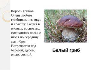 Король грибов. Очень любим грибниками за вкус и красоту. Растет в еловых, сос
