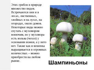 Этих грибов в природе множество видов. Встречаются они и в лесах, лиственных,