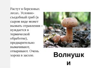 Растут в березовых лесах. Условно-съедобный гриб (в сыром виде может вызвать