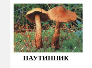 ПАУТИННИК
