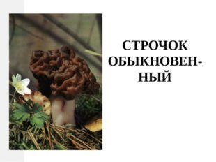 СТРОЧОК ОБЫКНОВЕН-НЫЙ