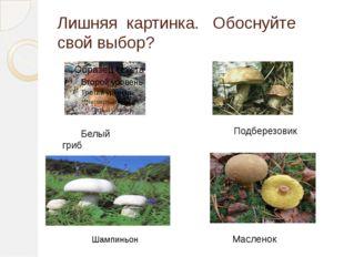 Лишняя картинка. Обоснуйте свой выбор? Белый гриб Подберезовик Масленок Шампи