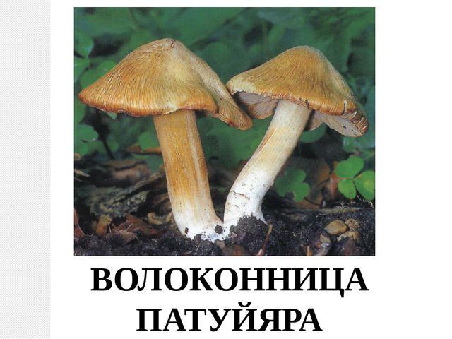 ВОЛОКОННИЦА ПАТУЙЯРА