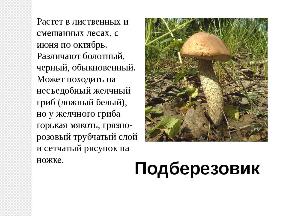 Растет в лиственных и смешанных лесах, с июня по октябрь. Различают болотный,...