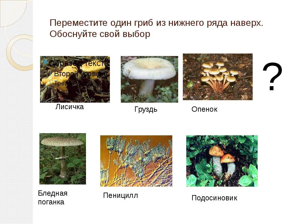 Переместите один гриб из нижнего ряда наверх. Обоснуйте свой выбор ? Лисичка...