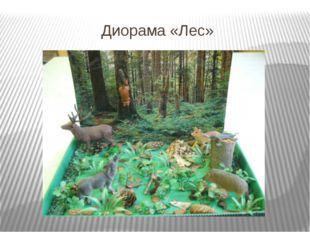 Диорама «Лес»