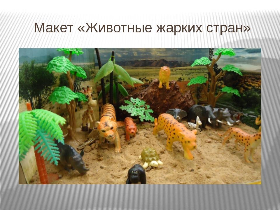 Макет «Животные жарких стран»