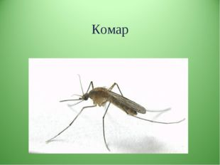 Комар