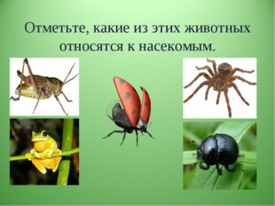Отметьте, какие из этих животных относятся к насекомым.