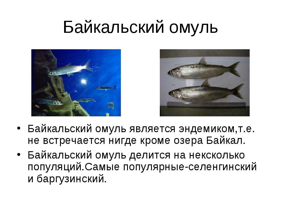 Байкальский омуль Байкальский омуль является эндемиком,т.е. не встречается ни...