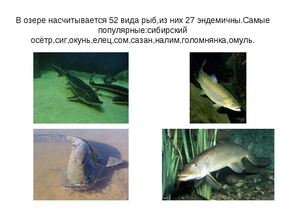 В озере насчитывается 52 вида рыб,из них 27 эндемичны.Самые популярные:сибирс...