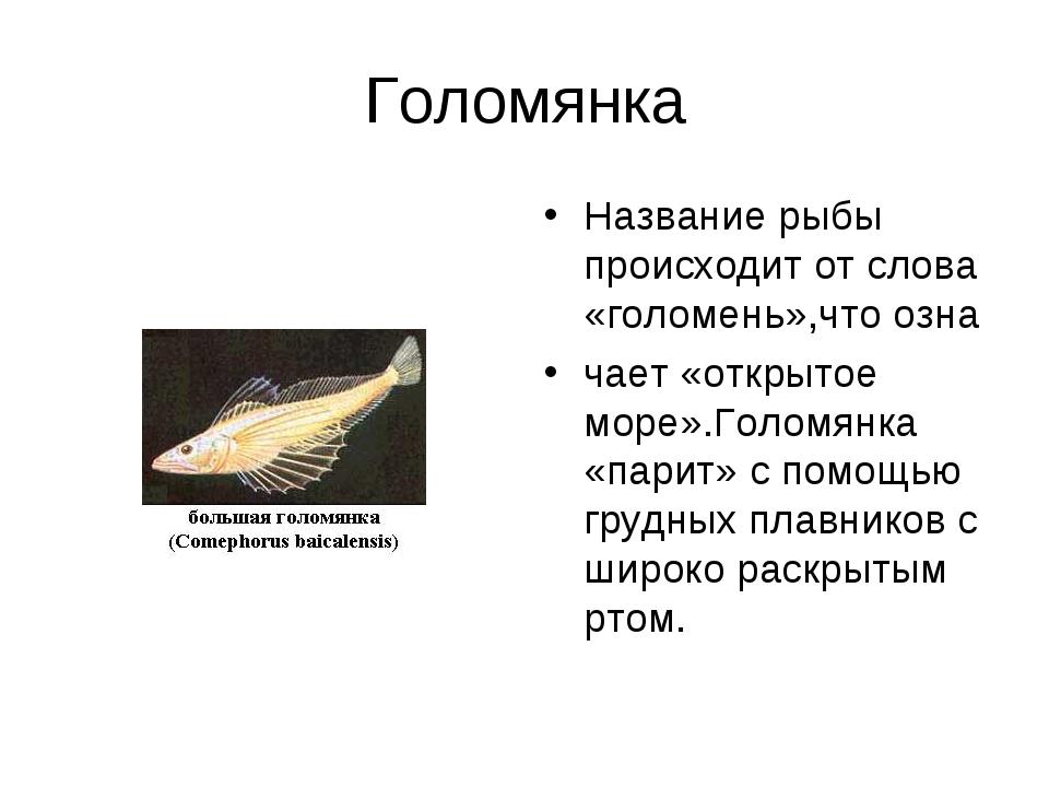 Голомянка Название рыбы происходит от слова «голомень»,что озна чает «открыто...