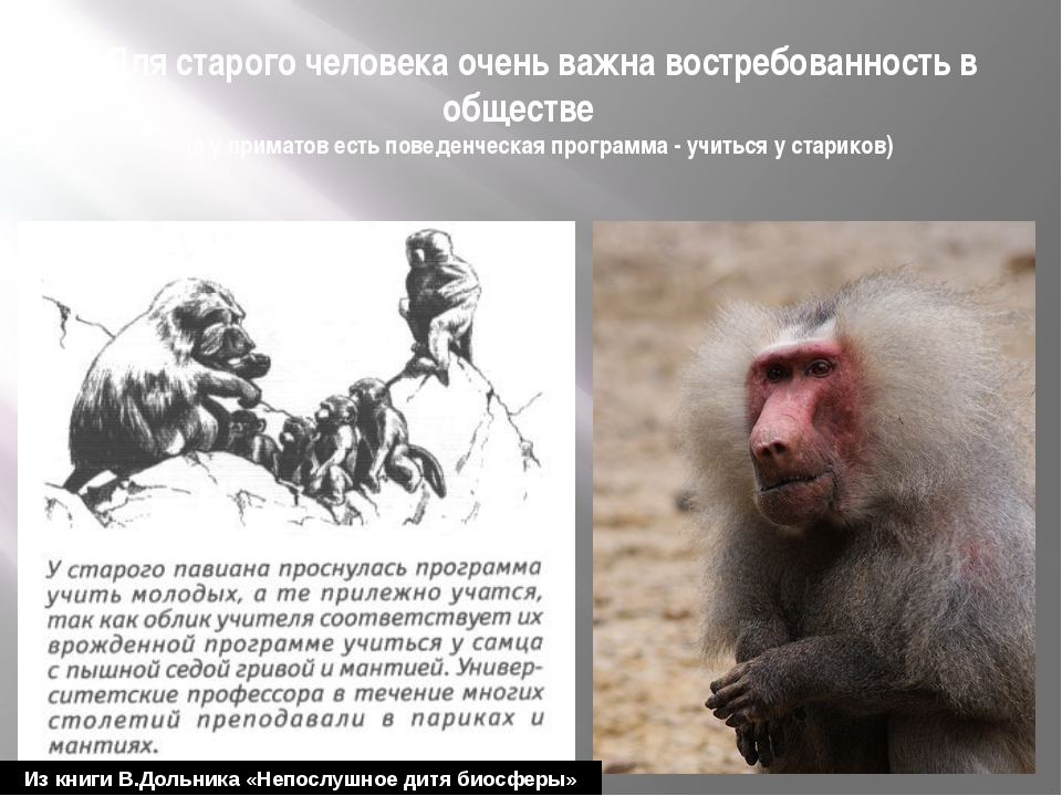 Для старого человека очень важна востребованность в обществе (а у приматов ес...