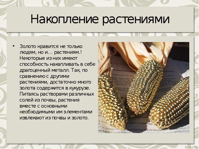 Накопление растениями Золото нравится не только людям, но и… растениям.! Неко...