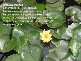 Кубышка жёлтая Категория III – редкий вид. Многолетнее водное растение. Лекар