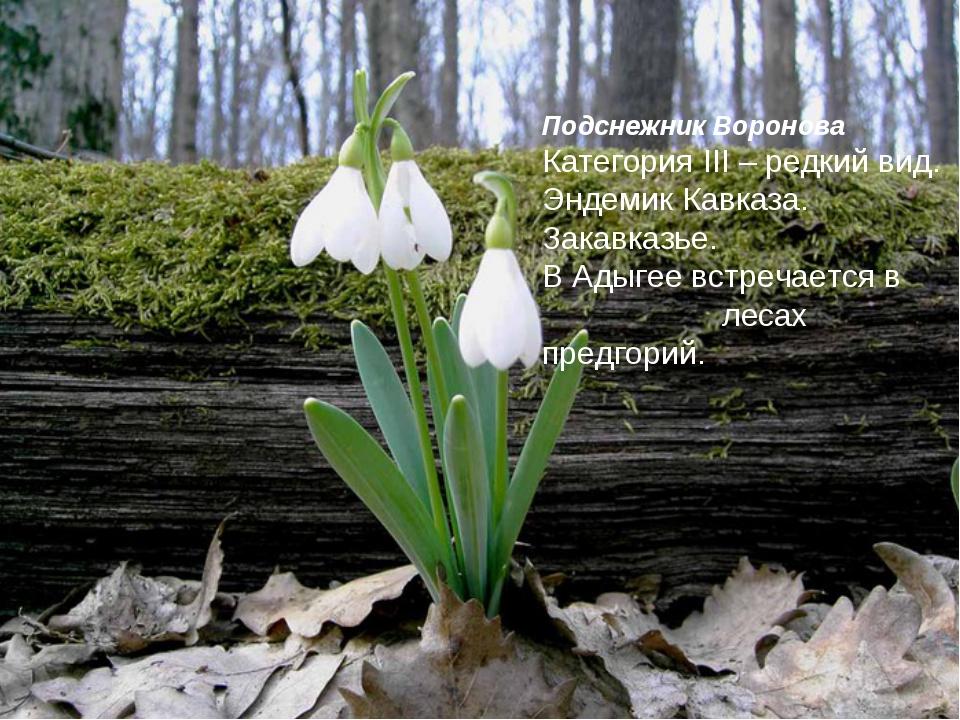 Подснежник Воронова Категория III – редкий вид. Эндемик Кавказа. Закавказье....